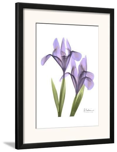 Purple Iris-Albert Koetsier-Framed Art Print