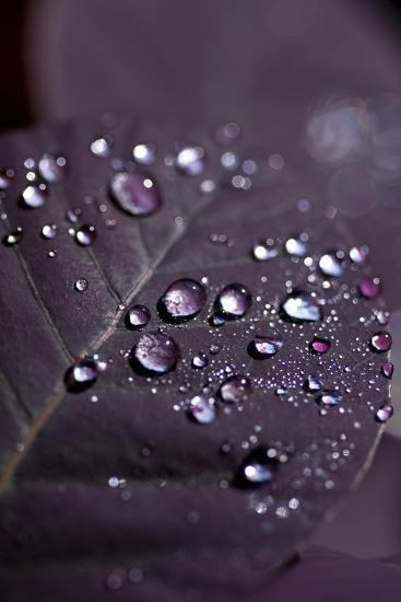 Purple Leaves II-K.B. White-Photographic Print