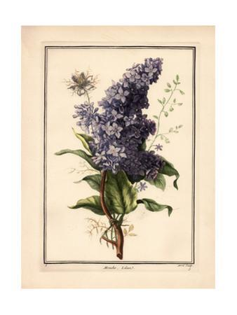 Purple Lilac with Green Leaves