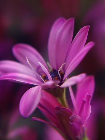 https://imgc.artprintimages.com/img/print/purple-macro-flower-blossom_u-l-f8qgqm0.jpg?p=0