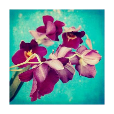 Purple Miltonia Orchid-Alaya Gadeh-Art Print