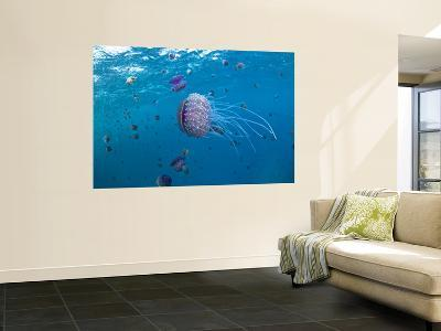 Purple Ocean Jelly Fish, Ras Banas, Red Sea-Mark Webster-Wall Mural