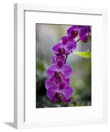 Purple Orchid At The Botanic Garden Photographic Print By
