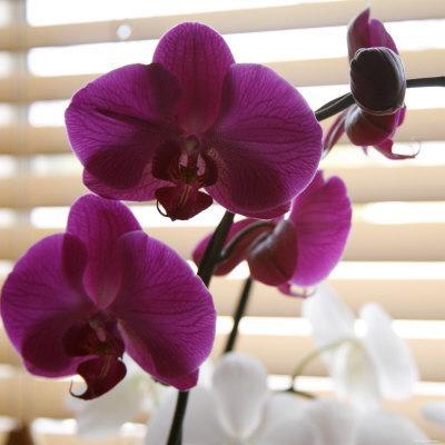 https://imgc.artprintimages.com/img/print/purple-orchids-i_u-l-p23fth0.jpg?p=0