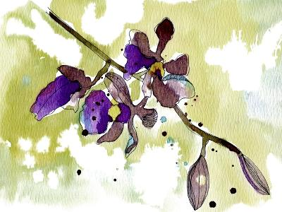 Purple Orchids-Cayena Blanca-Giclee Print