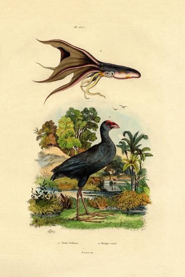 Purple Swamphen, 1833-39--Giclee Print