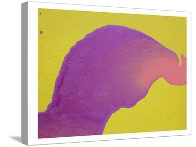 Purple to Pink-Deb McNaughton-Stretched Canvas Print