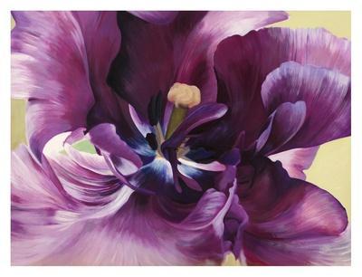 https://imgc.artprintimages.com/img/print/purple-tulip-close-up_u-l-f5fcaf0.jpg?p=0