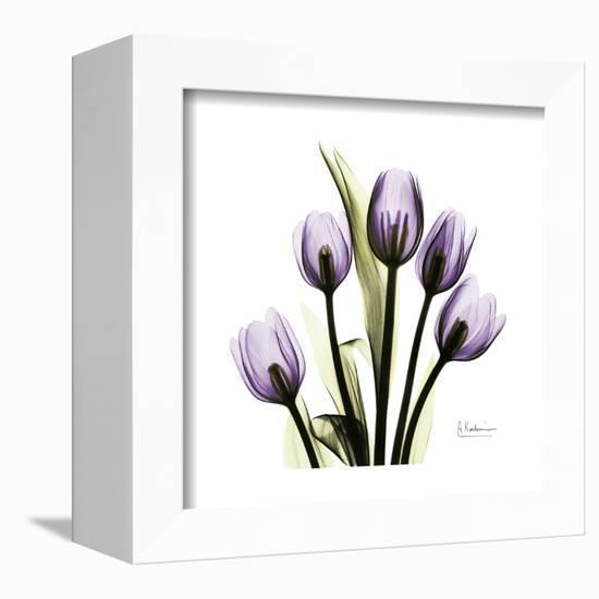 Purple Tulip Square-Albert Koetsier-Framed Stretched Canvas Print