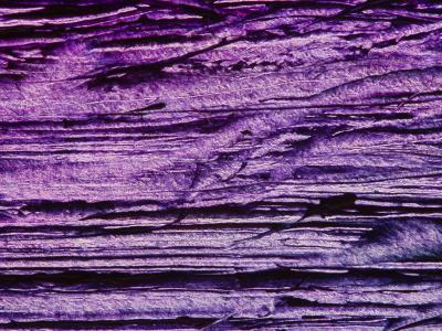 Purple, Weathered Background--Photographic Print