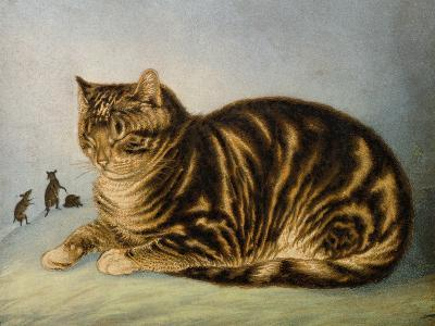 Puss Napping-George Baxter-Giclee Print