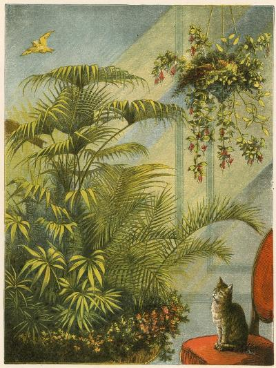 Pussy and Dicky, Cat and Canary-English School-Giclee Print