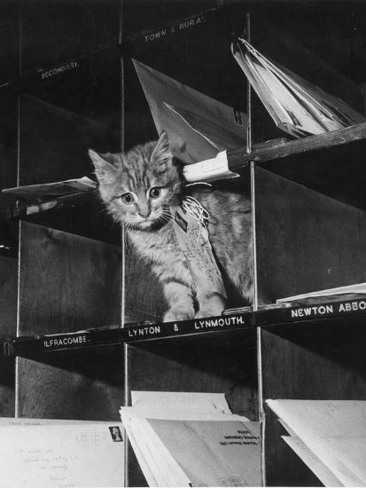 Pussy Cat Post-Keystone-Photographic Print