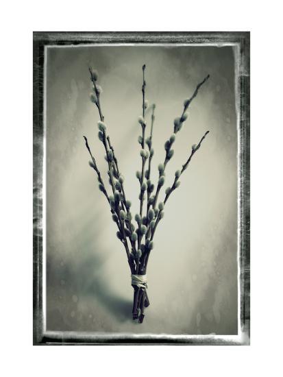 Pussy Willow 04-Tom Quartermaine-Giclee Print