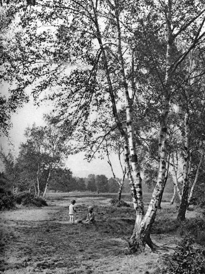 Putney Heath, London, 1926-1927-McLeish-Giclee Print