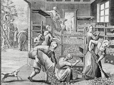 Putting Leaves on Shelves to Feed Silkworms--Giclee Print