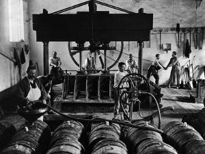 Putting the Wine in Barrels in Champagne, C.1900