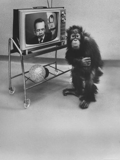 Puzzled Orangutan Standing Next to TV Set Playing the Image of President Richard Nixon-Yale Joel-Photographic Print