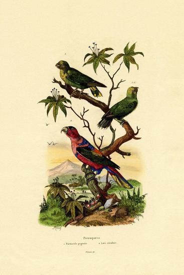 Pygmy Parrot, 1833-39--Giclee Print