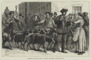 Pyrenean Goats in London, Selling the Milk