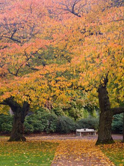 Quad in Autumn, University of Washington, Seattle, Washington, USA-Jamie & Judy Wild-Photographic Print