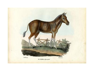 Quagga, 1863-79-Raimundo Petraroja-Giclee Print