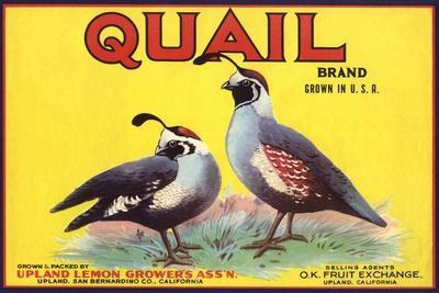 https://imgc.artprintimages.com/img/print/quail-brand-upland-california-citrus-crate-label_u-l-q1groon0.jpg?p=0