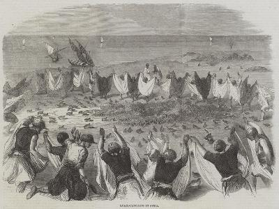 Quail-Catching in Syria--Giclee Print