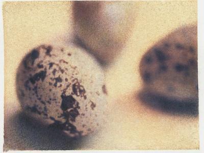 https://imgc.artprintimages.com/img/print/quail-eggs_u-l-pzljil0.jpg?p=0
