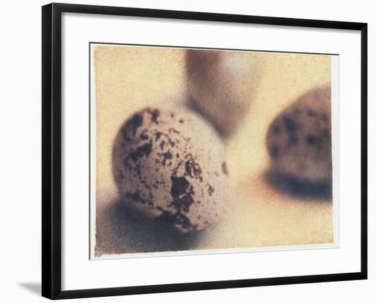 Quail Eggs-Jennifer Kennard-Framed Photographic Print