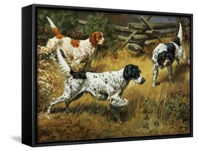Quail Hides in a Covert from Pointing English Setters-Walter Weber-Framed Canvas Print