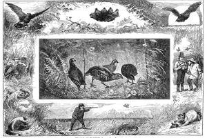 Quail Hunting, 1880