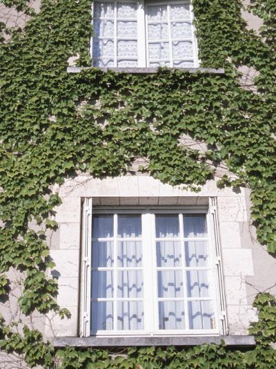 Quaint Windows in Vine-Covered Building--Photographic Print