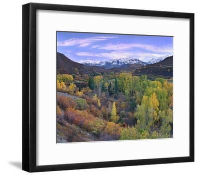Quaking Aspen Forest In Autumn Snowmass Mountain Near Quaking Aspen Colorado Art Print Tim Fitzharris Art Com