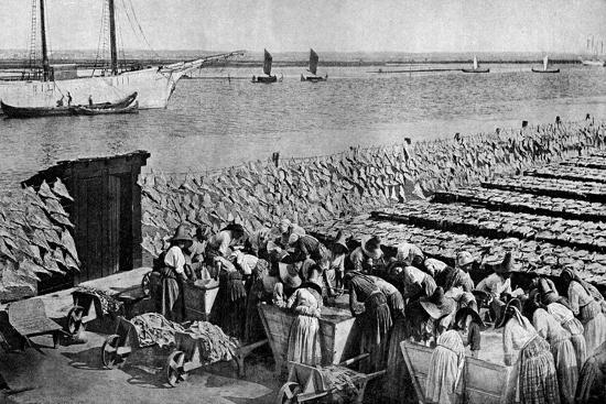Quantities of Codfish Drying in the Sun at Aveiro by the Mouth of the Vouga, Portugal, C1930S-AW Cutler-Giclee Print