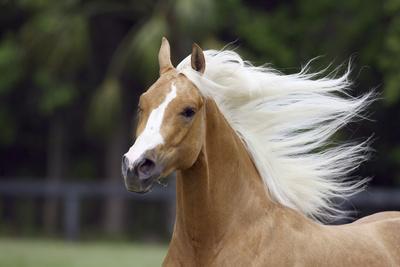https://imgc.artprintimages.com/img/print/quarter-horses-007_u-l-q12tpm50.jpg?p=0