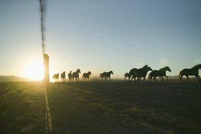 Quarter Horses Running by Fence Line-DLILLC-Photographic Print