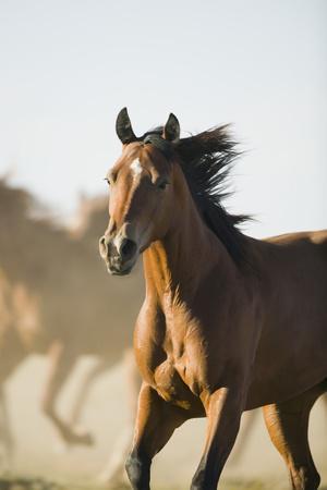 https://imgc.artprintimages.com/img/print/quarter-horses-running_u-l-pzr7tt0.jpg?p=0