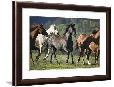 Quarter Horses Running-DLILLC-Framed Photographic Print
