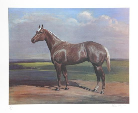 Quarterhorse-Helen Hayse-Collectable Print