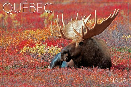 Quebec, Canada - Bull Moose in Flowers-Lantern Press-Wall Mural