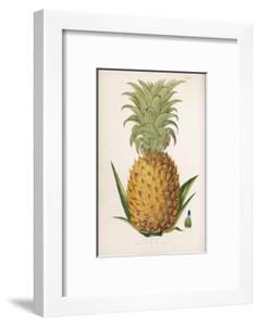 Queen Pineapple