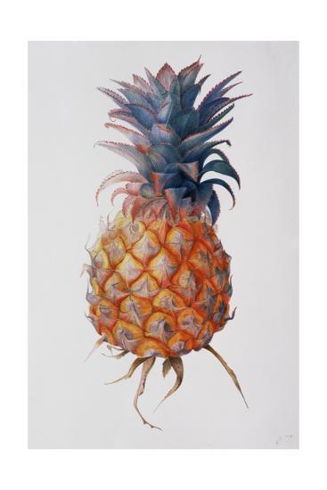 Queenie Pineapple, 1994-Rebecca John-Giclee Print