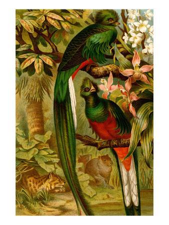 https://imgc.artprintimages.com/img/print/quetzal_u-l-pgfvhc0.jpg?p=0