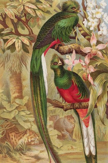 Quetzal--Giclee Print