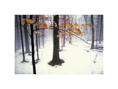 Quiet Woods-David Winston-Giclee Print