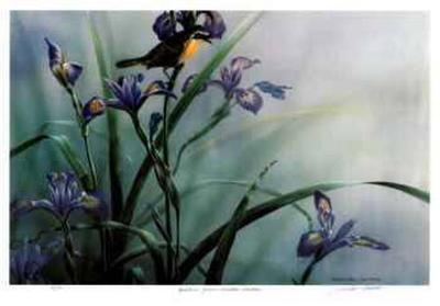 Quietude - Yellow Throated Warbler-Michael Dumas-Collectable Print