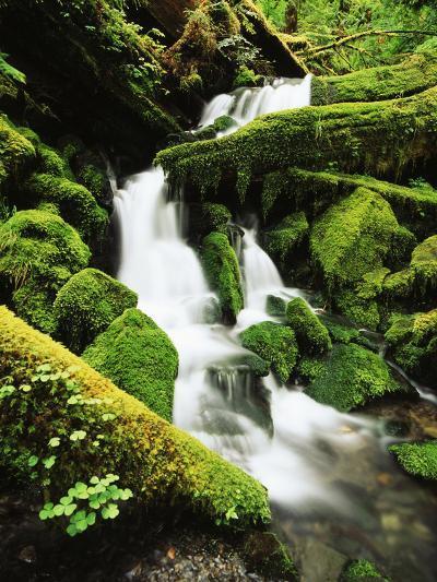 Quinalt Rainforest with Graves Creek Tributary, Olympic National Park, Washington State, USA-Stuart Westmorland-Photographic Print