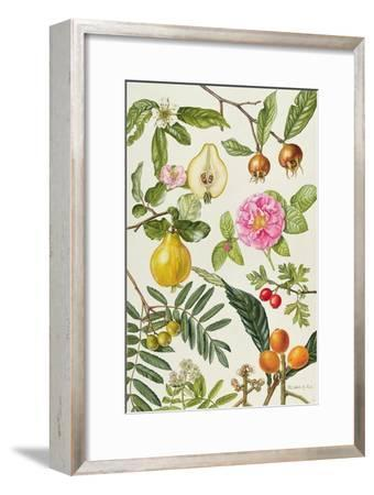 Quince and Other Fruit-Bearing Trees-Elizabeth Rice-Framed Giclee Print