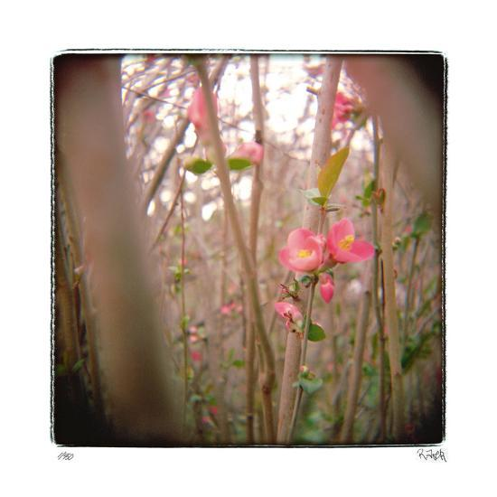 Quince Forest-Rebecca Tolk-Giclee Print